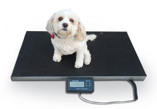 How To Choose the Best Quality Livestock Scales for Your Use?